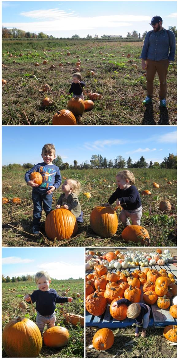 #27---Pumpkins